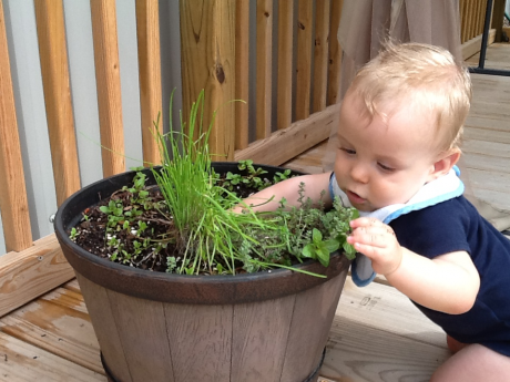 Chase tends to our herb garden